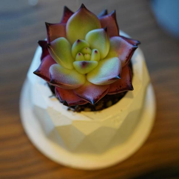 تصویر از گلدان سیمانی رمئورد